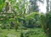 Un autre point de vue du jardin de Carreco