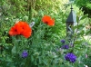 Le jardin de Carreco