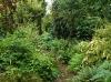 Le jardin d'hostas à Saint-Georges-de-Reintembault