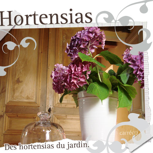 Des hortensias séchés