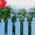 Les barrières apportent une petite touche déco dans le jardin. Alors pourquoi ne pas les fabriquer soi-même et à moindre coût ? Pour cela récupérer des palettes, enlever les pointes […]