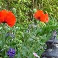 Février annonce la reprise des travaux au jardin avantl'arrivée du printemps même si l'hiver est encore là. Pendant les accalmies de froid, la terre du potager va pouvoir être bêchée […]