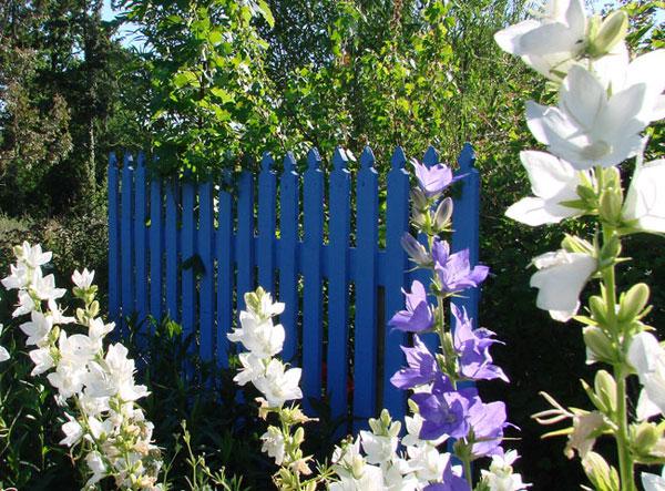 Barrière en bois bleue dans le jardin