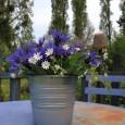En ce début de printemps, tables et salons de jardin sont de sortie. Après un nettoyage de printemps, avec brosse et saint-marc, les voilà prêts à recevoir quelques bouquets.Quelques fleurs […]