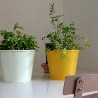 En plus de leur utilisation culinaire, les plantes aromatiques sont souvent décoratives. Elles poussent sur de petites surfaces, idéalement proche de la cuisine, ou encore en pot. La plantation des […]