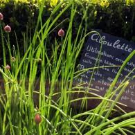 Avril est un mois frais et clément dont toutjardinier doit encorese méfier. La végétation se réveille et de nombreux travaux sont à faire aupotager, auverger et aujardin d'ornement. Comme le […]