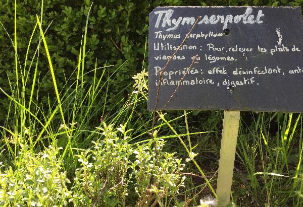 aromatique-thym-serpolet