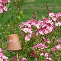 Le mois de juin annonce l'arrivée des beaux jours. les roses sont en fleurs, les légumes d'étésont en place et les floraisons estivales se préparent. Pourtant de nombreux travaux au […]