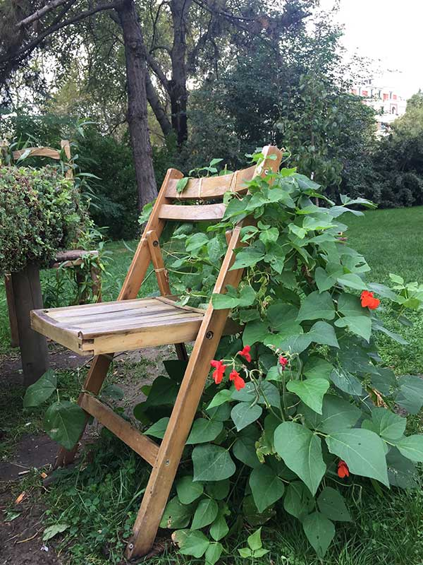 Feuillage autour de la chaise