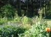 Les vivaces sont très présentes dans le jardin